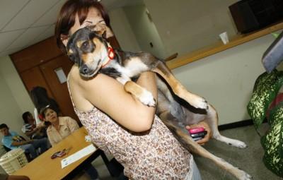 perros rescatados de la calle