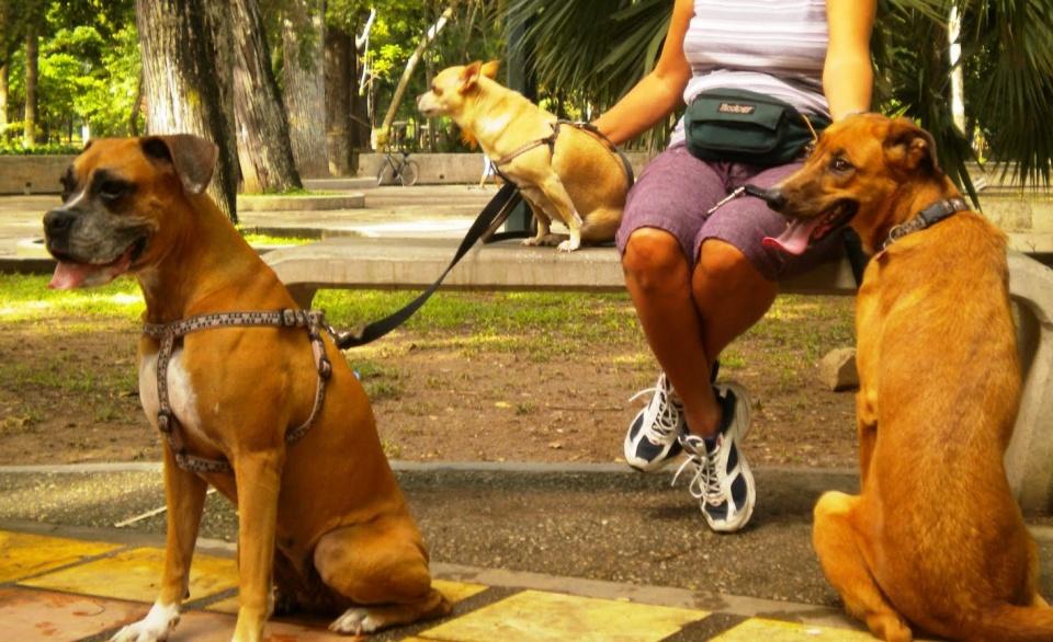 Caminata Mascotas 1