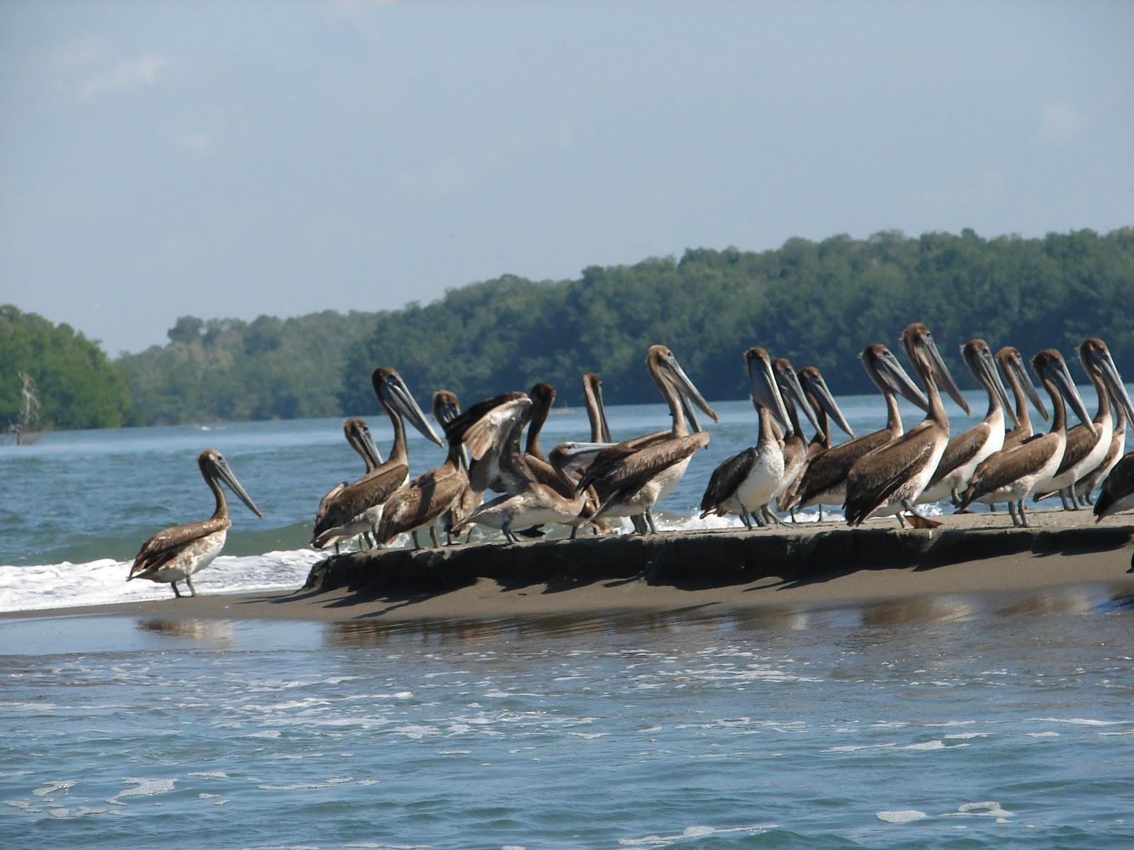 Aves Maritimas 1