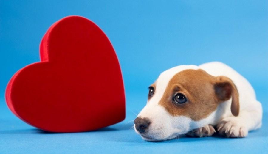 Perro Corazón 2