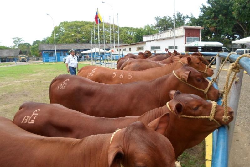 Ganaderos estiman elevar producción de leche en 20%.