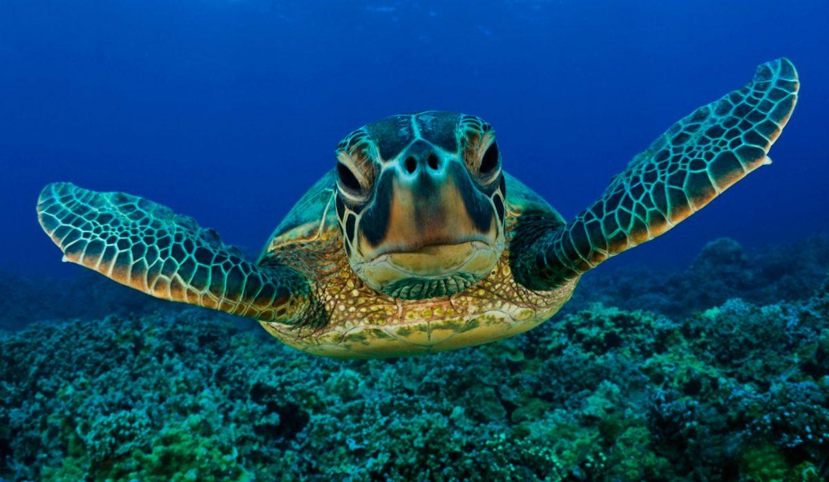 ¿Sabías que hay un Día Mundial de las Tortugas? ¡Es hoy!