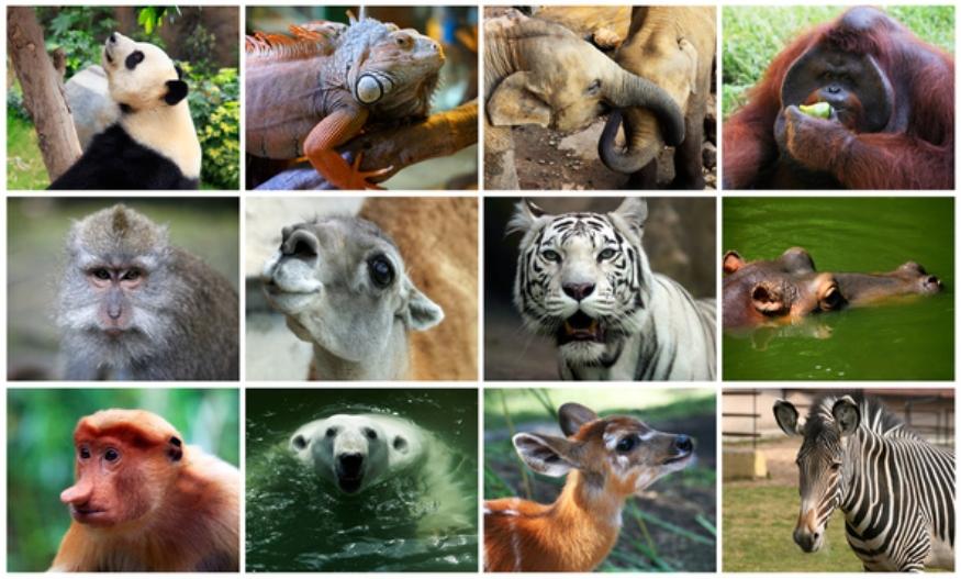Hoy se celebra el Día Mundial de los Animales