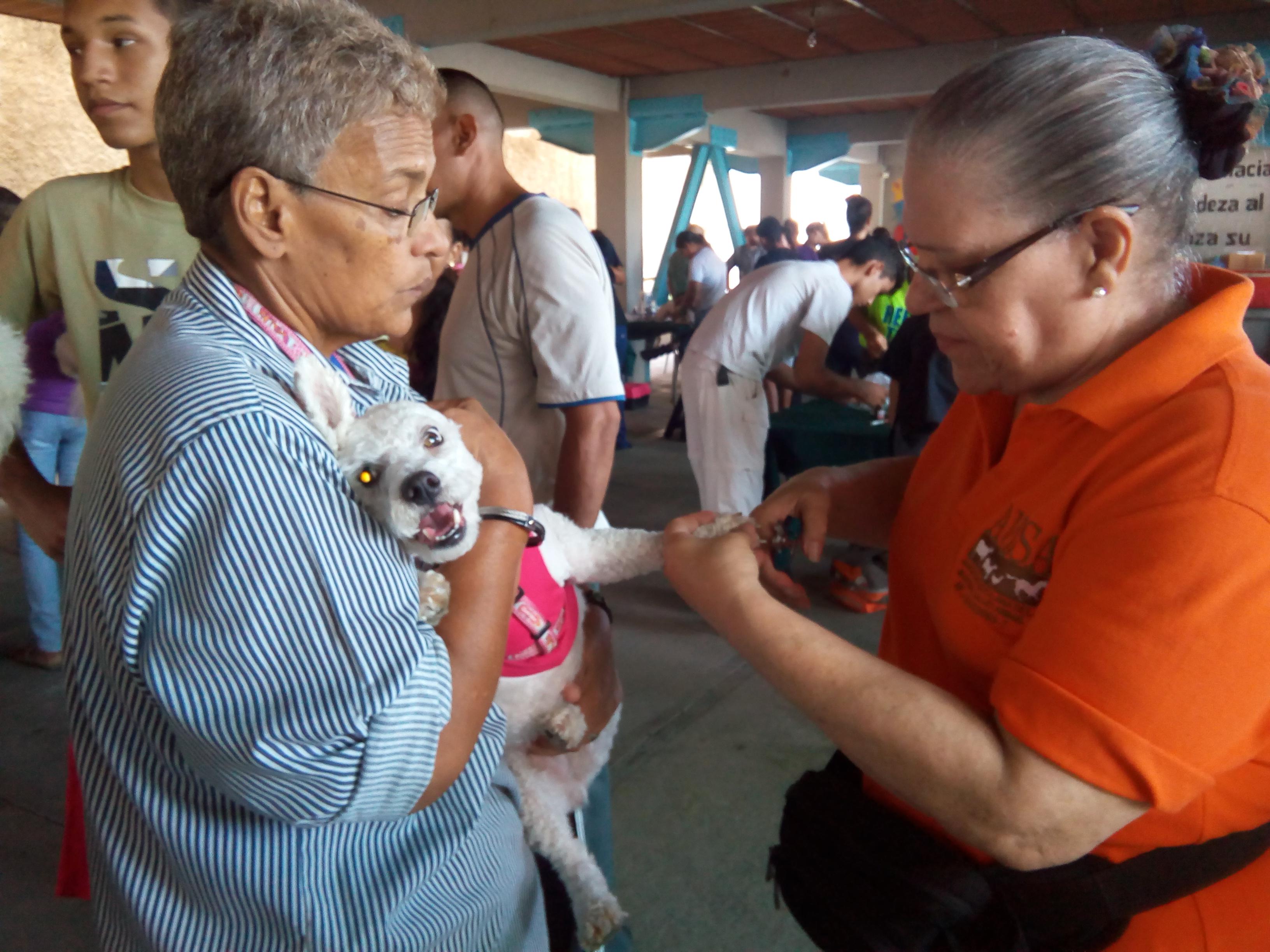 Dra. María de Los Angeles Rivero, Directora de AVISA, realizando corte de uñas a mascota.