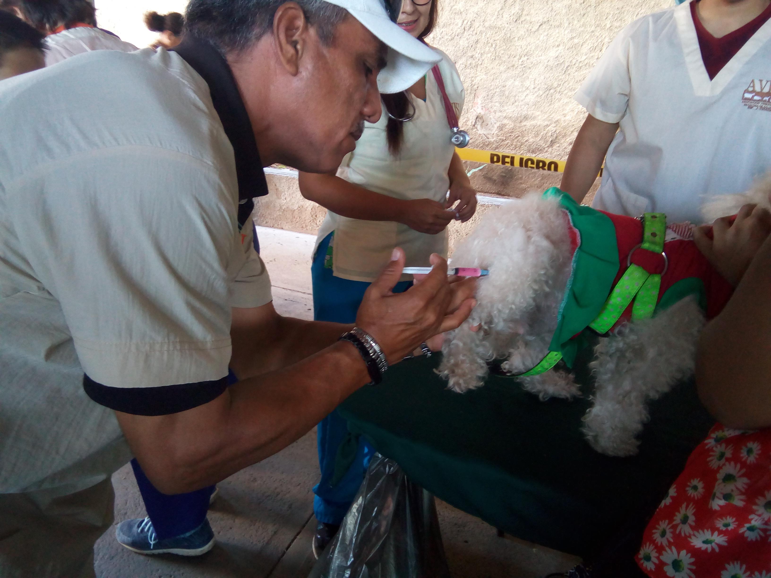 Voluntario Colocando Vacuna Contra la Rabia, Jornada Salud Animal, 2019.