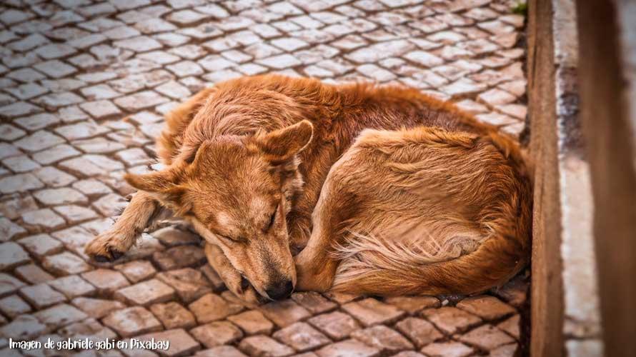 Mascotas-en-Situación-de-Calle-2